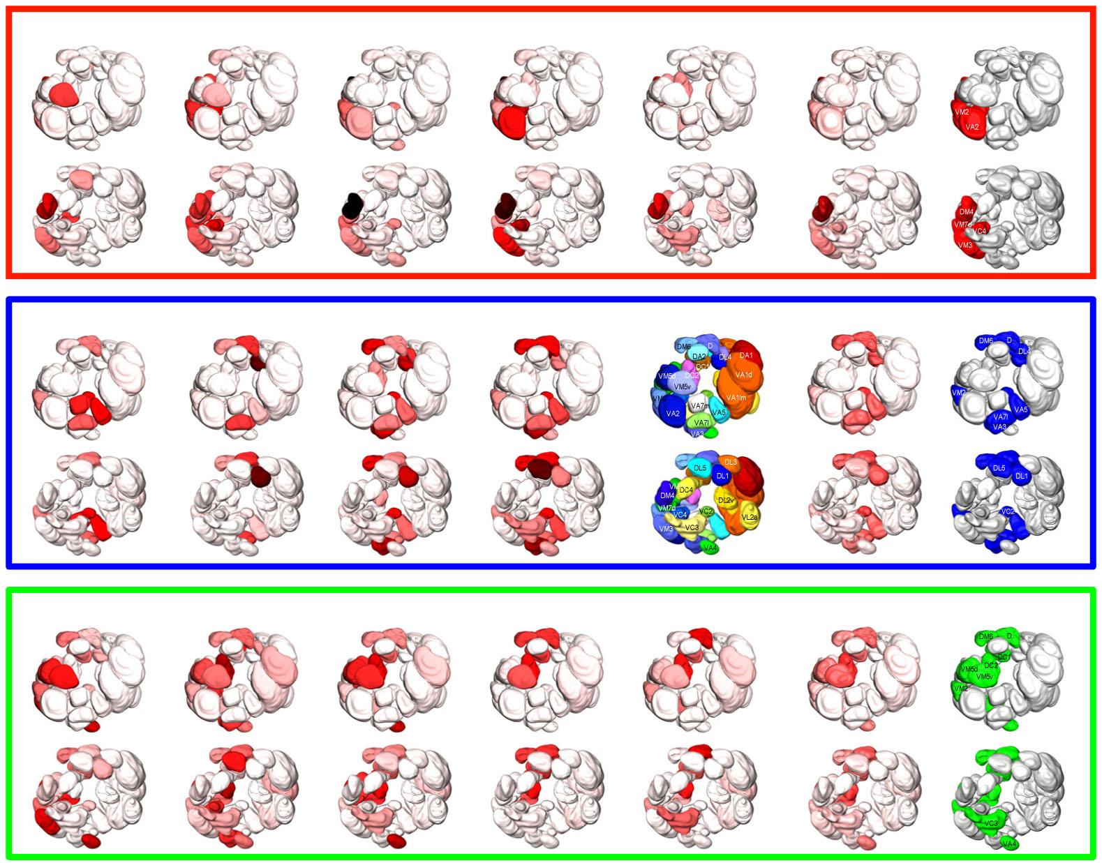 触角葉糸球体における匂い価値の表現
