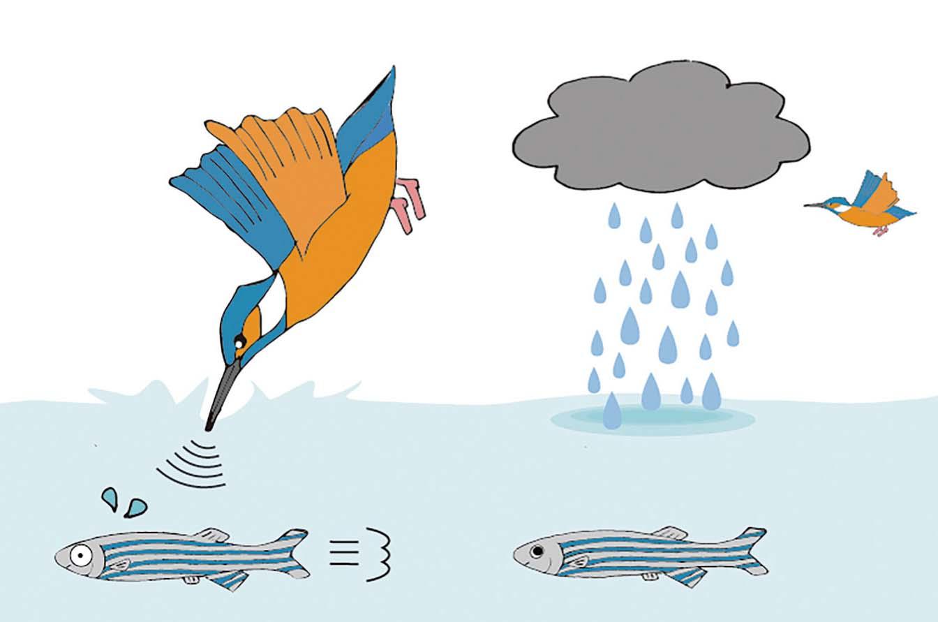 鳥襲撃仮説